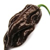 Pimenta preta