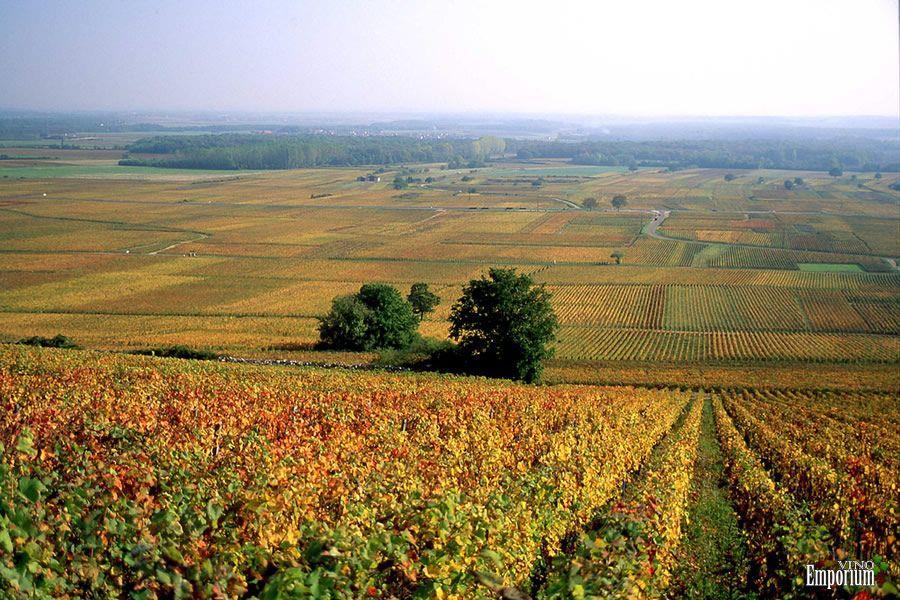 Clos Vougeot - Borgonha