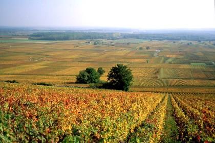 Regiões da Champanhe e da Borgonha viram patrimônio mundial da humanidade