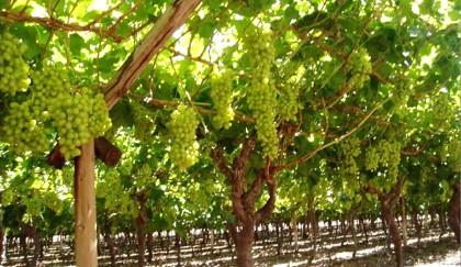 Farroupilha é a nova Indicação de Procedência de Vinhos Finos do Brasil