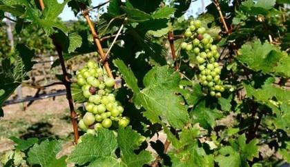 Região da Chapada Diamantina na trilha da produção de vinhos