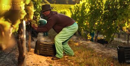 O vinho e a crise brasileira. E agora!?