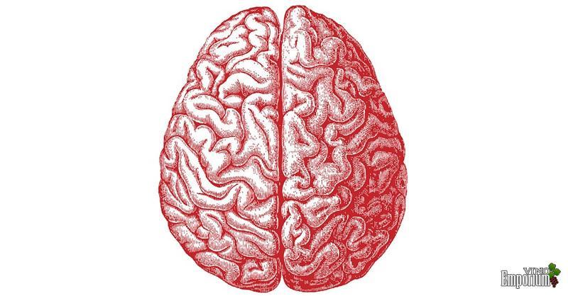 Oito mitos desvendados sobre o cérebro