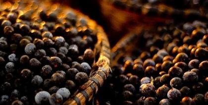 Pesquisadores defendem região DOC, tal como dos vinhos, para produtos da Amazônia