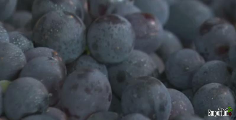 Unicamp descobre técnica que deixa vinhos e sucos mais saudáveis
