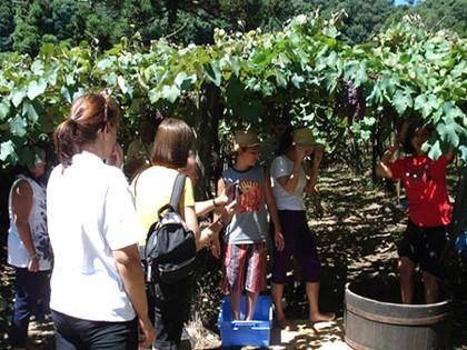 Turismo de experiências impulsiona a Serra