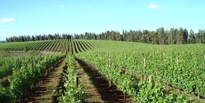 O Brasil tem potencial para produzir vinhos excepcionais e competitivos?