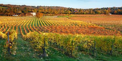 A próxima série do History Chanel vai contar um achado inusitado em vinícola inglesa