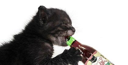 Japoneses lançam vinho (sem álcool) para gatos