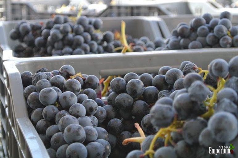 Vendas de sucos de uva e espumante crescem no Brasil