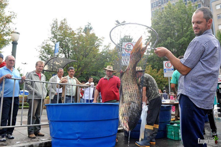 Feira do Peixe Vivo e Feira do Vinho ocorrem na próxima semana em Caxias