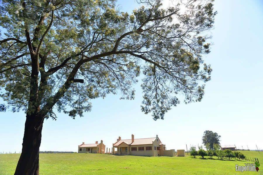 Com plantio em 30 hectares, empresa Bueno Bellavista Estate produz vinhos finos em Candiota