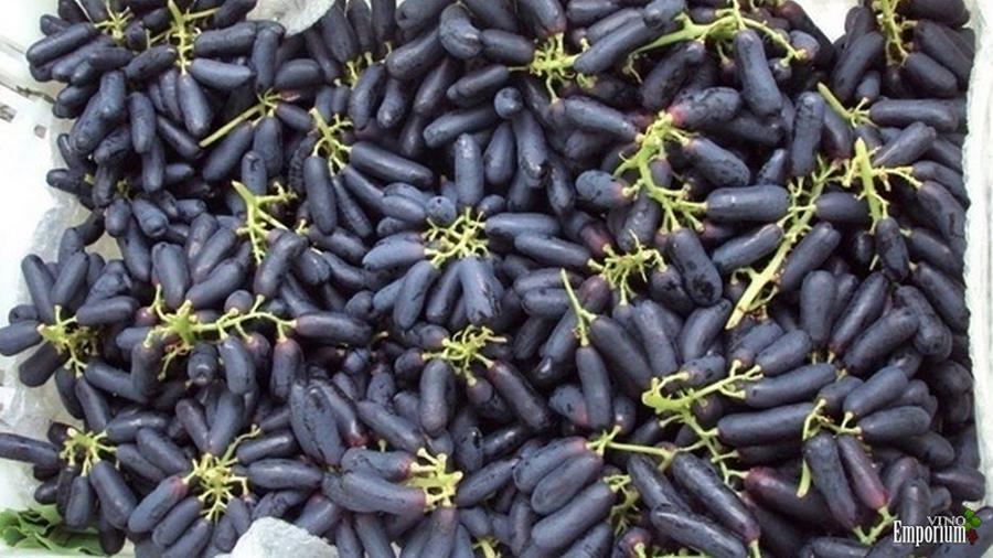 Com formato de pimenta, uva dedo-de-moça é novidade no mercado