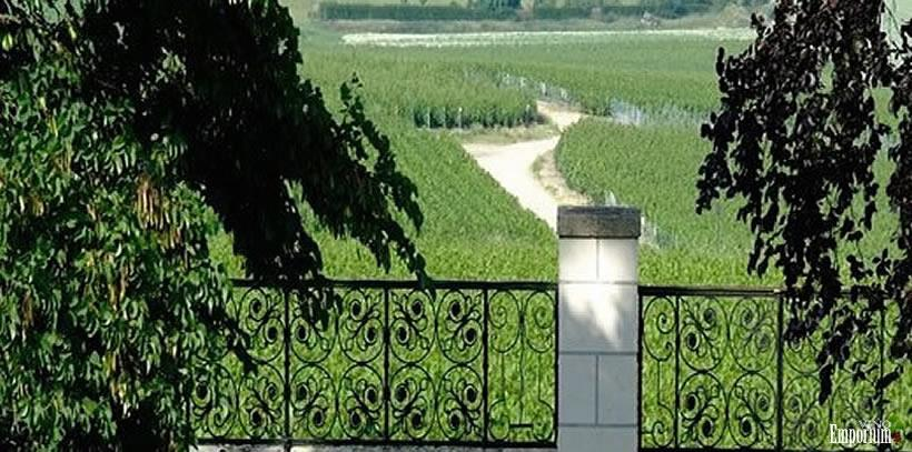 Vinhedo da propriedade da Maison Veuve Clicquot