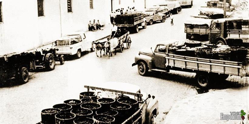 1950 - Mais uma imagem mostra a rua onde está atualmente a Vinícola Aurora em época de safra