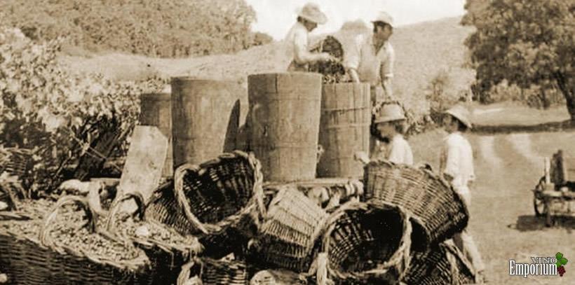 1960 - Safra no momento da colheita