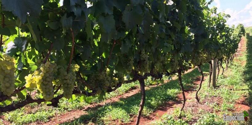 Aracuri Vinhos Finos