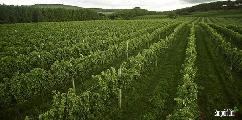 Suzin Vinhedos e Vinhos Finos