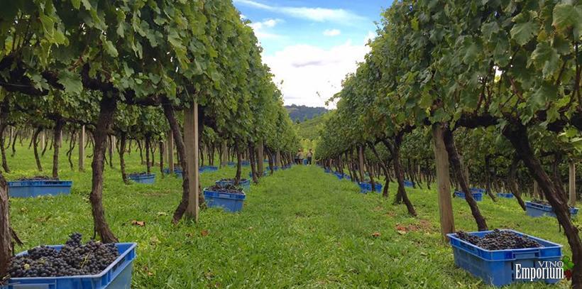 Vinhos Larentis