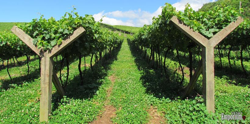 Vinhos Cappelletti