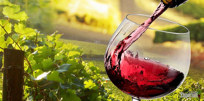 Vinhos Canção