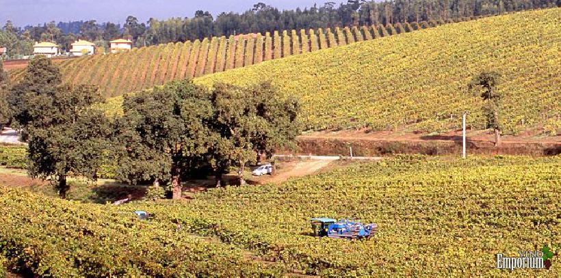 Borges Wines