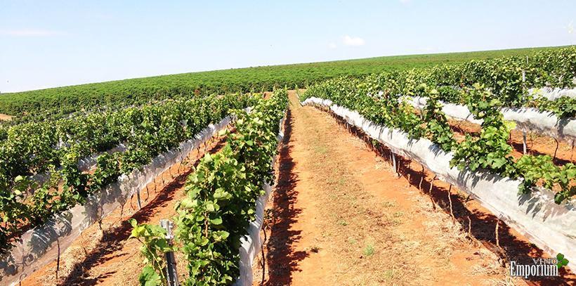 Vinhos Maria Maria