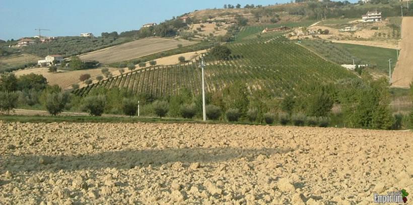 Vini Farnese