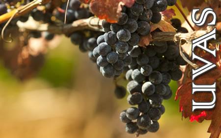 Uvas no Vino